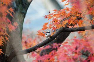 2016鎌倉紅葉おすすめコースと古民家カフェ