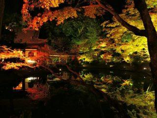 高台寺の紅葉のライトアップの期間や時間は?