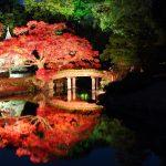 六義園の紅葉のライトアップ期間と茶屋情報