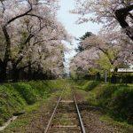 青森県五所川原市芦野公園「金木桜まつり」のゴールデンウィークの駐車場とアクセスの案内