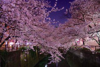 目黒川桜祭りの日程とアクセス情報