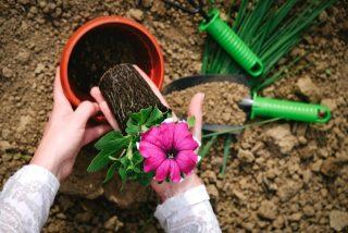 土用期間に土いじりがダメな理由とは?土用とは1年に4回あります。